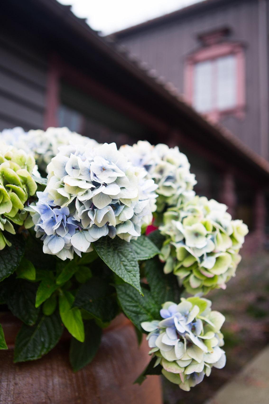 Leie lokale i Oslo til fest, blomster utenfor Gjestestuene